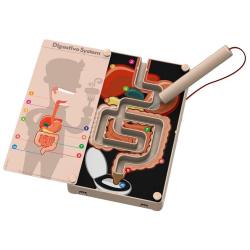 KidzLabs Digestive System Buzz Wire